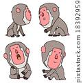 japanese, monkey, monkeys 18392959