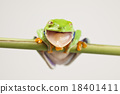 Red eyed frog green tree on colorful background 18401411