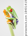 Red eyed frog green tree on colorful background 18401419