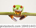 Red eye tree frog on colorful background 18401443