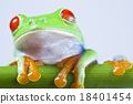 Red eye tree frog on colorful background 18401454