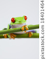 Tree frog on colorful background 18401464