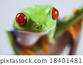 Tree frog on colorful background 18401481