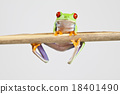 Tree frog on colorful background 18401490