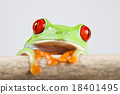 Tree frog on colorful background 18401495