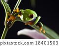 Tree frog on colorful background 18401503