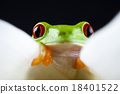 Frog in the jungle on colorful background 18401522