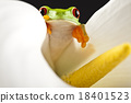 Frog in the jungle on colorful background 18401523