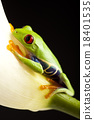 Frog in the jungle on colorful background 18401535