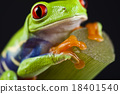 Exotic frog on colorful background 18401540