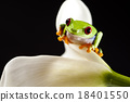 Exotic frog on colorful background 18401550