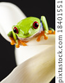 Exotic frog on colorful background 18401551