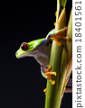 Exotic frog on colorful background 18401561
