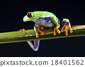 Exotic frog on colorful background 18401562