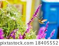Hummingbird flying next to purple flower 18405552