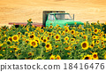 Agricultural Flat Bed Truck in Field of Sunflowers 18416476