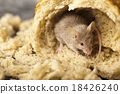 Mouse and bread, rural vivid colorful theme 18426240