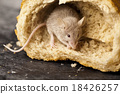 Mouse and bread, rural vivid colorful theme 18426257