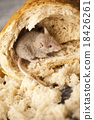 Mouse and bread, rural vivid colorful theme 18426261