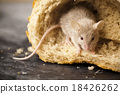 Mouse and bread, rural vivid colorful theme 18426262
