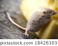Mouse background, rural vivid colorful theme 18426303