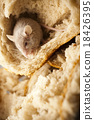 Mouse and bread, rural vivid colorful theme 18426395
