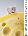 Funny mouse on the cheese, rural vivid colorful  18426423