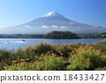 大石公园 黄雏菊属 富士山 18433427