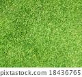 绿色 草地 草坪 18436765