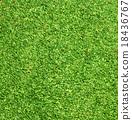 绿色 草地 草坪 18436767