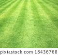 跑马场 绿色 草地 18436768