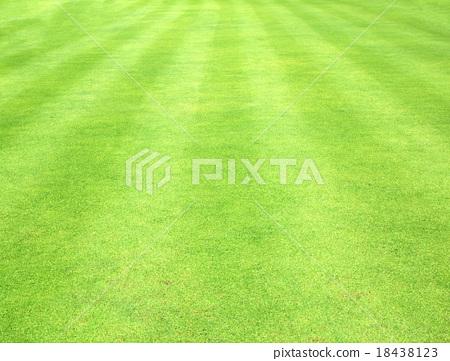 Beautiful green grass texture 18438123