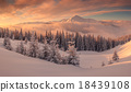 forest, hill, snow 18439108