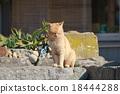 貓 貓咪 小貓 18444288