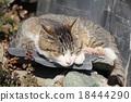 貓 貓咪 小貓 18444290