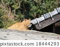 貓 貓咪 小貓 18444293