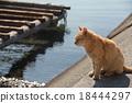 貓 貓咪 小貓 18444297