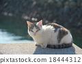 貓 貓咪 小貓 18444312