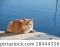 貓 貓咪 小貓 18444336