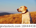 Dog at the sunset 18444438