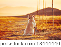 Dog at the sunset 18444440