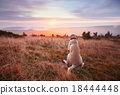 Dog at the sunset 18444448