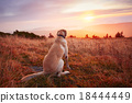 Dog at the sunset 18444449