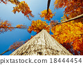 Tree branches in sunny forest 18444454