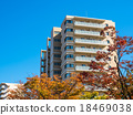街道樹 行道樹 公寓 18469038