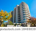 街道樹和公寓秋葉Zelkova 18469039