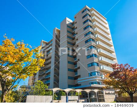 街道樹 行道樹 公寓 18469039