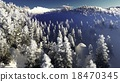 Christmac forest in mountains 18470345