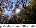 อาซาฮีในป่า 18470564