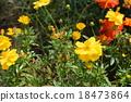 꽃밭, 꽃, 노랑 18473864